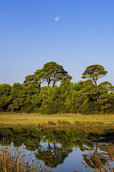 Trees, Reflections, Water, Lake, Nature, Landscape, Sky