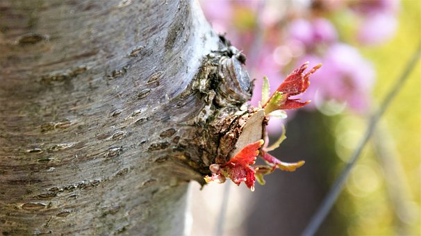 Loot, Leaves, Twig, Tree Trunk, Bark, New, Spring