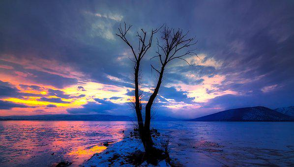 Tree, Lonely, Lake, Landscape, Mood, Loneliness