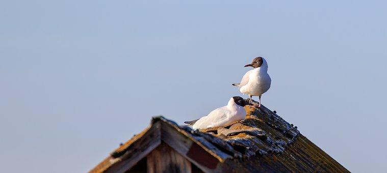 Seagull, Spring Lake, Sun, Morning Sun, Riedsee, Hut