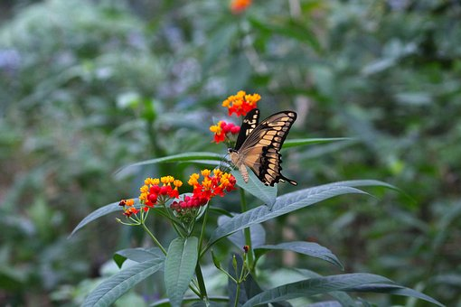 Butterfly, Summer, Nature, Insect, Wing, Flower