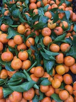 Oranges, Fruits, Fresh, Harvest