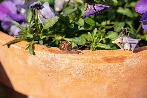 Snail, Shell, Flowerpot, Flowers, Animal, Spiral
