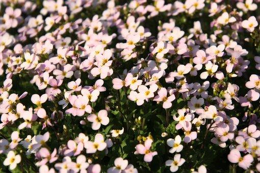 Sea Of Flowers, Blütenmeer, Flowers, Spring, Bloom