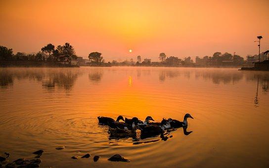 Travel, Nature, Duck, Birds, Landscape, Summer, Blue