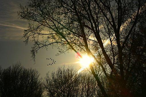 Tree, Silhouette, Setting Sun, Con Trails, Sky, Dusk