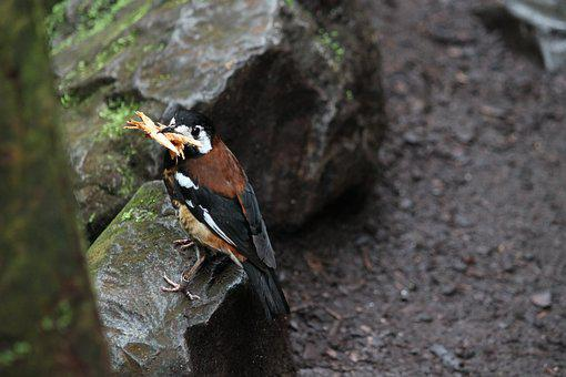 Bird, Wood, Animal, Forest, Wild Bird, Of Course