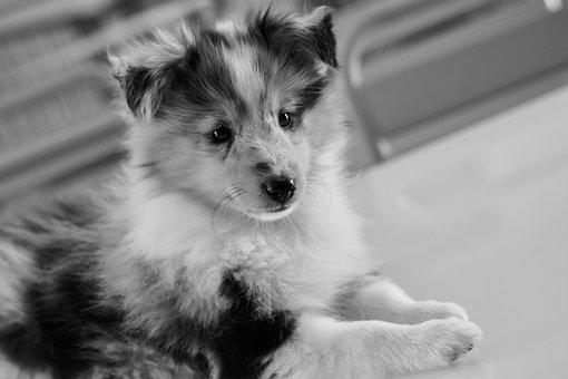 Dog, Puppy, Young Bitch Princess Blue