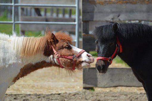 Pony, Small Horse, Play, Animal, Horse, Cute, Mane
