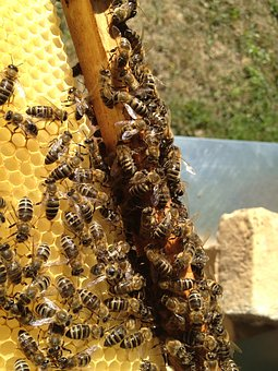 Bees, Beekeeping, Blossom, Bloom, Insect, Beehive