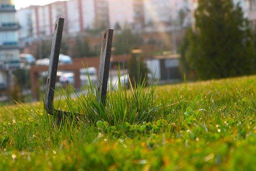 Green, Greens, Metal, Daniel, Nature, Leaves, Plant
