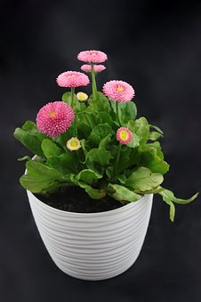 Flower, Flower Pot, Spring, Flowers, Decoration