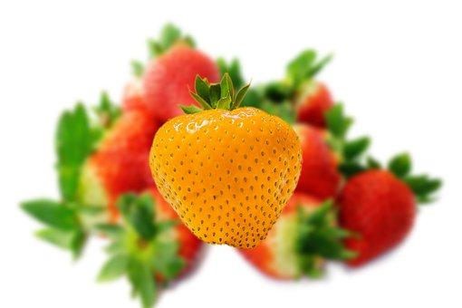 Strawberry, Distinction, Distinguish, Individuality