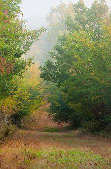Fall, Landscape, Nature, Trees, Leaves, Autumn