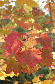 Autumn, Fall Foliage, Leaves, Forest, Colorful, Nature