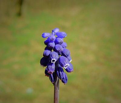 Flower, Flowering, Spring, Figure, Bud