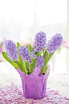 Hyacinth, Purple, Pastel, Spring, Nature, Flowers