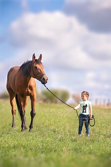 Horse, Child, Meadow, Horses, Animal, Girl, Summer