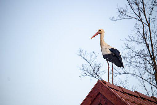Stork, Bird, Migratory Bird, Animal, Sky