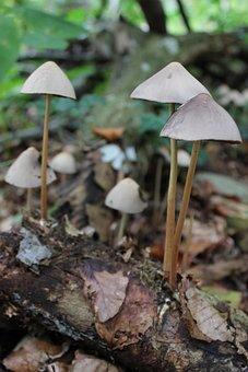Mushrooms, Forest, Nature, Mushroom, Autumn