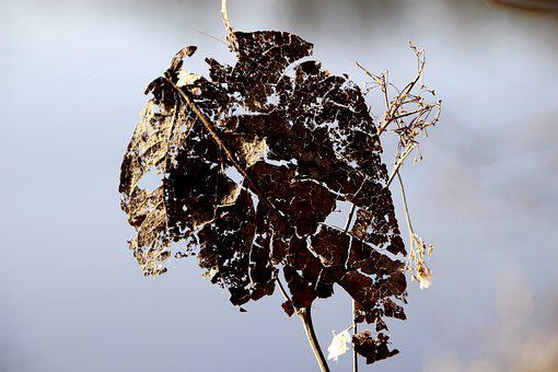 Leaf, Transience, Old, Corrupted, Beautiful, Live