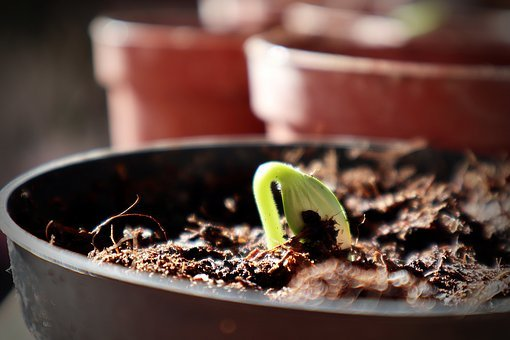 Potted Plant, Seedling, Green, Gardening, Plant, Grow