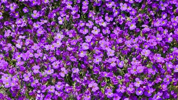 Nature, Plant, Garden, Flowers, Violet, Sun, Light