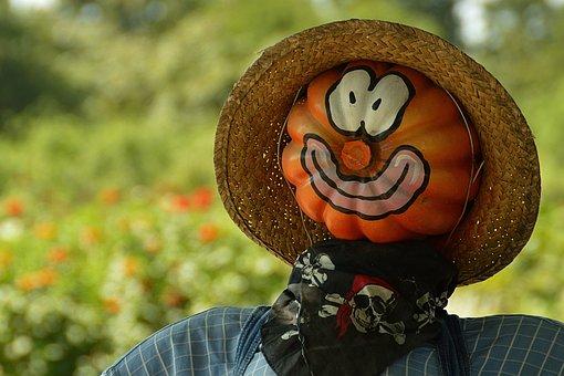 Pumpkin, Frightens Off Birds, Farm, Man, Head, Field