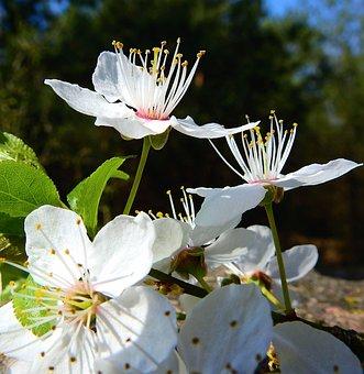 Flowers, Flowering, Spring, Figure