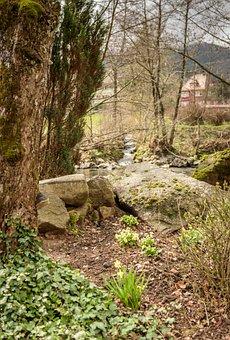 Frühlingsblüher, Stones, River, Tree, Bach, Nature