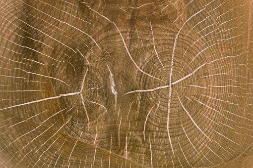 Wood, Wood Board, Table Top, Board, Oak, Nuclear