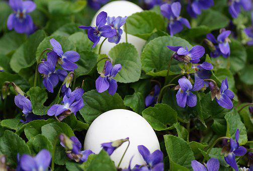 Violets, Eggs, White, Easter, Spring, Vernal, Holiday
