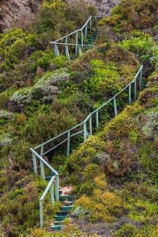 Stairway, Handrails, Steps, Stairs, Ambition, Bush