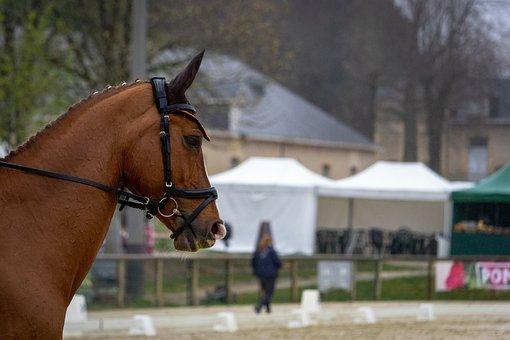 Horses, Horse, Nature, Animals, Western, Mane, Equine