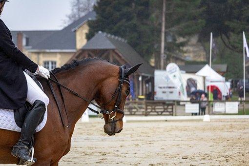Horse, Horses, Dressage, Pompadour, Nature, Animals