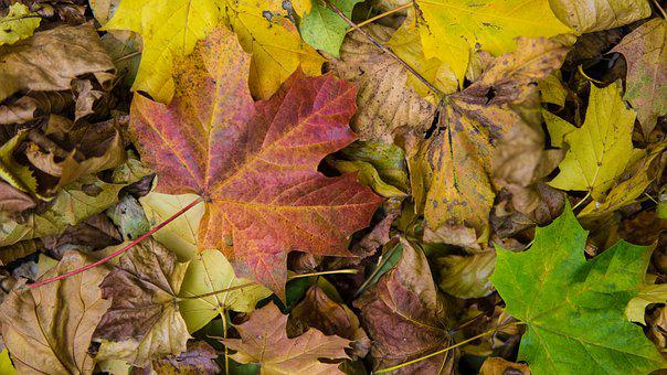 Autumn Leaf, Leaf, Tr, Leaves, Autumn, Nature, Colorful