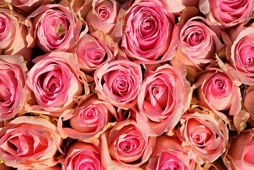 Rose, Flower, Plant, Bouquet, Romantic, Decoration