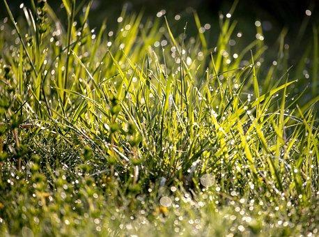 Meadow, Grass, Dewdrop, Drip, Bokeh, Morning, Fresh