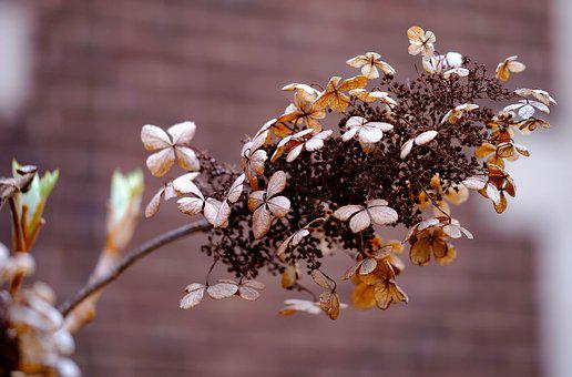Dried, Brown, Garden, Floral, Plant, Flower, Nature