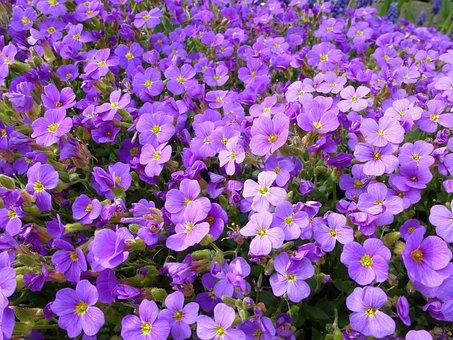 Blue Pillow, Violet, Petals, Garden, Flowers