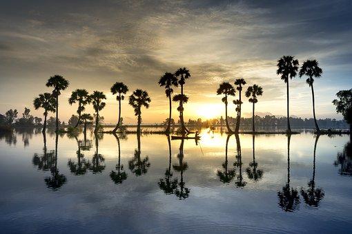Scenery, Palm, Tree, Sunrise, Sky, Nature, Full Color