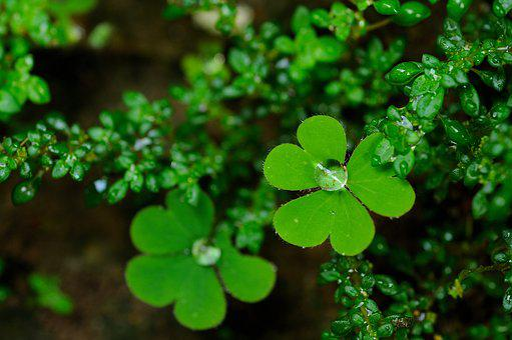 Dew, Green, Nature, Water, Garden, Dewdrop, Plant