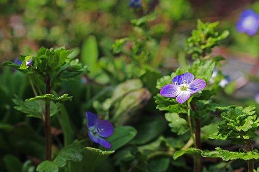 Wild Herb, Weed, Pointed Flower, Grassland Plants
