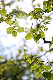 Spring, Green, Leaves, Nature, Garden, Wood, Structure