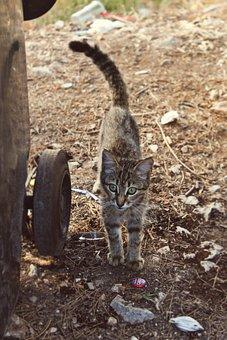 Garbage, Littering, Environmental Pollution, Cat, Pet