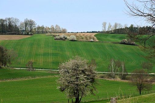 Landscape, Spring, Field, Arable, Meadow, Green, Rural