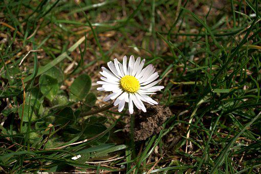 Flower, Daisy, Meadow, Yellow, Climate Protection
