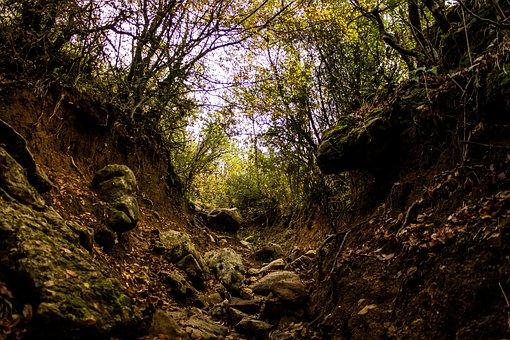Nature, Landscape, Forest, Naturelover, Mountains