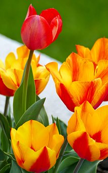 Nature, Garden, Flowers, Tulips, Spring, Leaves, Sun