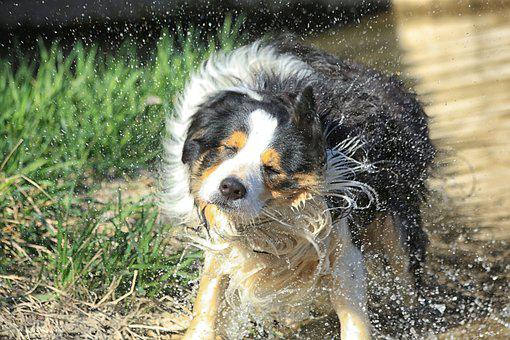 Dog, Hair, Mammals, Animals, Fur, Nature, Paw, Water